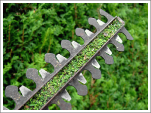 Hedge trimmers blade