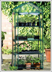A polythene covered mini greenhouse